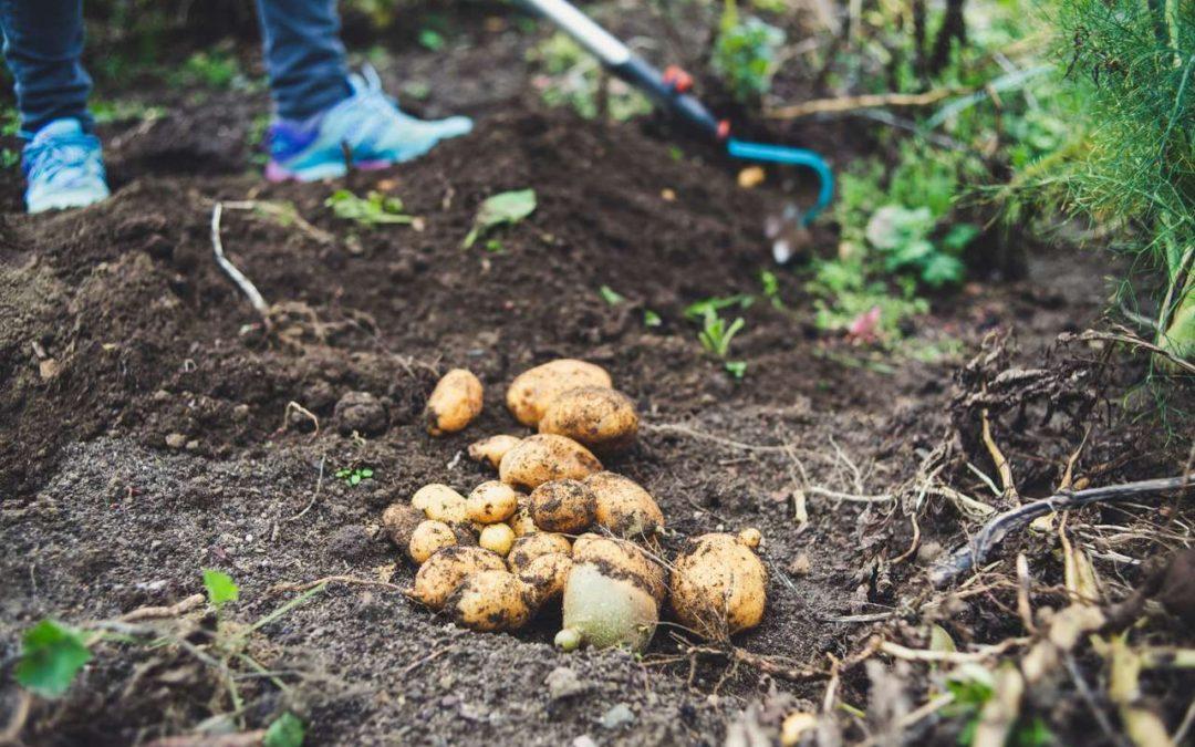 Garden Tips for October